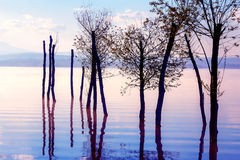Beautiful lake view in morning fog with mystic mountains and trees as leftovers of a mole in purple - blue tones. Stock Images