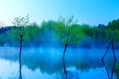 Beautiful lake view in morning fog with mystic trees as leftovers of a mole in blue tones. Stock Images