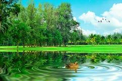 Beautiful lake view Stock Image