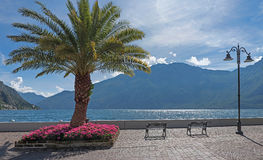 Beautiful lakeside promenade with palm tree and flowerbed, limone sul garda. Italy royalty free stock images