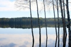 Beautiful lakeview with trees and reflections royalty free stock photo