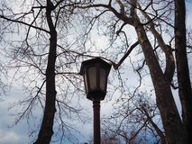 Beautiful lamppost near trees Royalty Free Stock Image