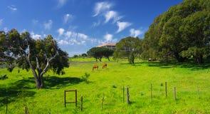 Beautiful land Royalty Free Stock Photos
