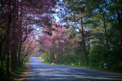 Beautiful land scape of asphalt highway in mountain route with p Royalty Free Stock Photos