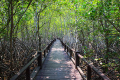 Beautiful land scape of wood way bridge in natural mangrove fore Stock Images