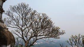 Beautiful landscap at Luangprabang Loas  from top of hill Stock Photo