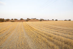 Beautiful landscape. Portugal - Alentejo - dry portuguese region Royalty Free Stock Image