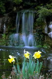 Beautiful landscape. With waterfall and daffodils in foreground Royalty Free Stock Photo