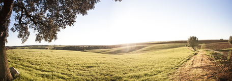 Beautiful landscape. At sunset in a meadow Alentejano Royalty Free Stock Photo