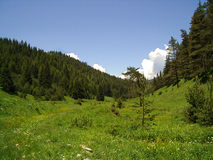 Beautiful landscape. Green valley in early summer near Govedartsi, Bulgaria royalty free stock image