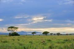 Serengeti national park scenery, Tanzania, Africa Royalty Free Stock Photography