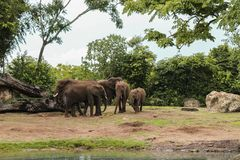 Beautiful landscape of African elephants in the park stock image