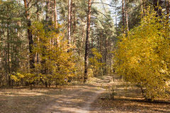 Beautiful landscape - autumn forest. And forest path Royalty Free Stock Photos