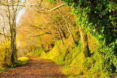 Beautiful landscape. Autumn Pathway alley Co.Cork, Ireland. Autumn Pathway alley Co.Cork, Ireland. Park road landscape with the autumnal forest. Orange trees Royalty Free Stock Photo
