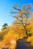 Beautiful landscape. Autumn Pathway Co.Cork, Ireland. Stock Photography