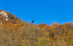 Beautiful landscape during autumn time full of colors. Bird flying over the forest Royalty Free Stock Photography
