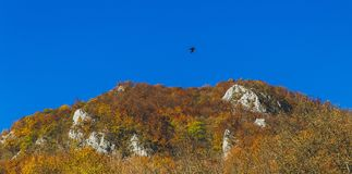 Beautiful landscape during autumn time full of colors and lovely blue sky. Beautiful landscape during autumn time full of colors, bird flying over the forest Stock Image