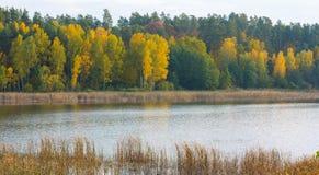 Beautiful landscape of autumnal forest near lake Stock Image