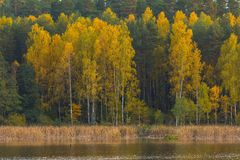 Beautiful landscape of autumnal forest near lake Royalty Free Stock Photos