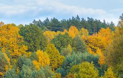 Beautiful landscape of autumnal forest near lake Stock Photography