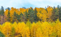 Beautiful landscape of autumnal forest near lake Stock Images