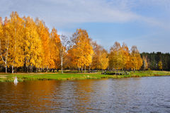 Beautiful landscape in autumnal park. Stock Images