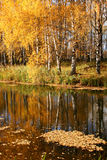 Beautiful landscape in autumnal park Royalty Free Stock Photos