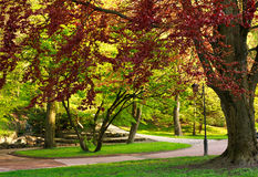 Beautiful landscape background in summer botanical city park Royalty Free Stock Images