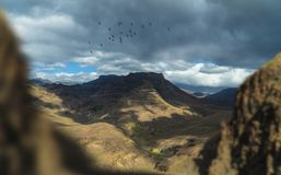 Beautiful landscape with the birds - Gran Canaria, Spain royalty free stock photo