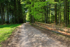 Beautiful landscape in the Black Forest in Germany Royalty Free Stock Photography