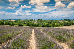 Beautiful landscape of blooming lavender field,lonely tree uphil Royalty Free Stock Photo