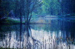 Beautiful landscape. Beautiful blue landscape of lake lake between forest at the evening Stock Photo
