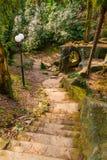 Beautiful landscape of Sochi Arboretum, Russia. Beautiful landscape with bridge, stone stairs and trees of Sochi Arboretum, Russia Royalty Free Stock Images