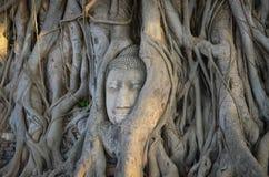 A buddha head in Wat Mahathat in Ayutthaya, Thailand. The beautiful landscape of buddha head in Wat Mahathat in Ayutthaya, Thailand stock photo