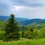 Beautiful landscape in Carpathian Stock Photography