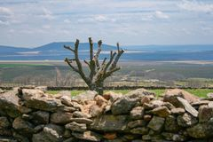 Beautiful landscape of castile with a stone wall, a tree pruned, mountains of fodo and a blue sky with clouds. Typical Spanish landscape of the lands of Castile royalty free stock images