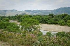 Beautiful landscape of a ceibo tree forest in. Beautiful green landscape of a ceibo tree forest in Manabi, Ecuador Royalty Free Stock Photos