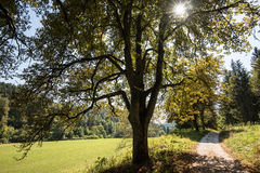 Beautiful landscape with chestnuts in Swabian Alb Stock Image