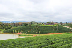 Beautiful landscape of Choui Fong Tea Plantation Royalty Free Stock Photography