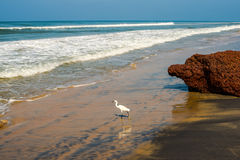 Beautiful landscape of the coast with a white bird of Varkala. Royalty Free Stock Photography