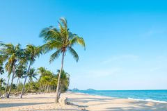 Landscape of coconut palm tree on tropical beach royalty free stock image