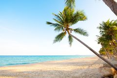 Landscape of coconut palm tree on tropical beach stock photos