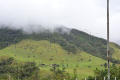 Beautiful landscape of the Cocora Valley, near to the colonial town of Salento, in Colombia. The Cocora Valley, a beautiful national park in the Eje Cafetero, an royalty free stock photography