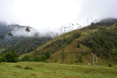 Beautiful landscape of the Cocora Valley, near to the colonial town of Salento, in Colombia. The Cocora Valley, a beautiful national park in the Eje Cafetero, an stock images