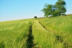 Country road. Village, track. Beautiful landscape stock photography