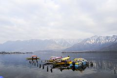 A beautiful landscape at the Dal Lake Kashmir, India during winter. Almost all local people using boat at the lake to travel Stock Image