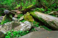 Beautiful landscape of dense woodland. Forest background Stock Photos