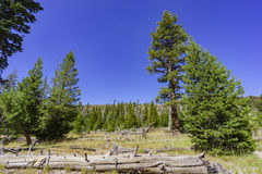 Beautiful landscape in Devils Postpile National Monument Royalty Free Stock Image