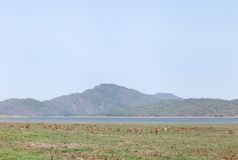 Beautiful landscape of Dhikala with deer in the grassland Royalty Free Stock Photos