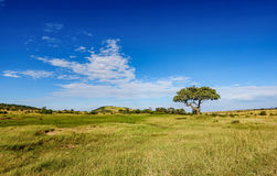 Beautiful landscape of dirt road and the tree in Kenya, Africa Stock Photo